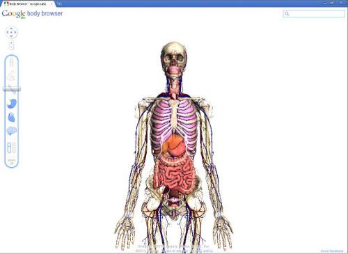 Wüstenschiff • Thema anzeigen - Google Body Browser: Zoomfahrt in ...